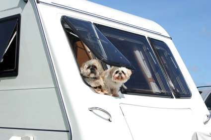 dogs in rv, heat alarm, freeze alarm, heat alarms, freeze alarms, cellular freeze alarm, cellular freeze alarms