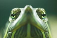 Wireless sensor monitors temp in pet turtle's vivarium
