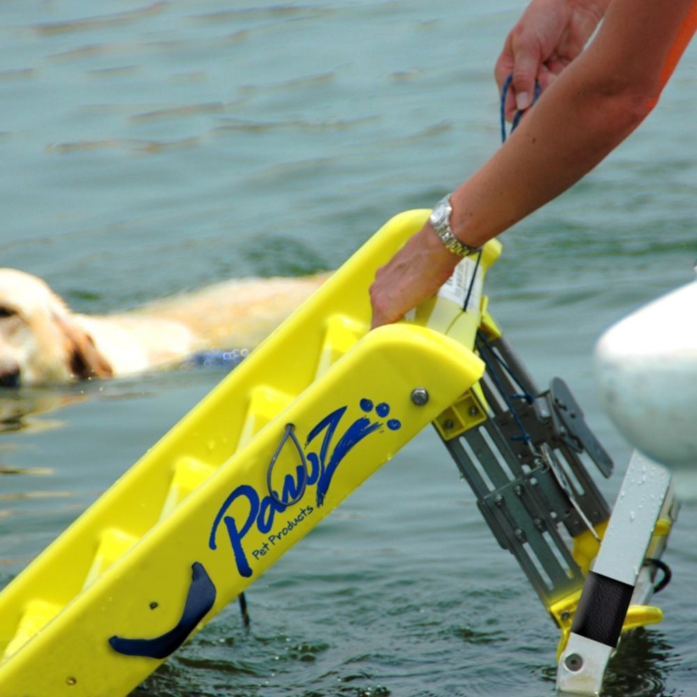 Water Safety for Pets