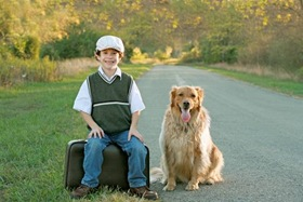 Home Alone Pet Supplies And Gear For Working Days And