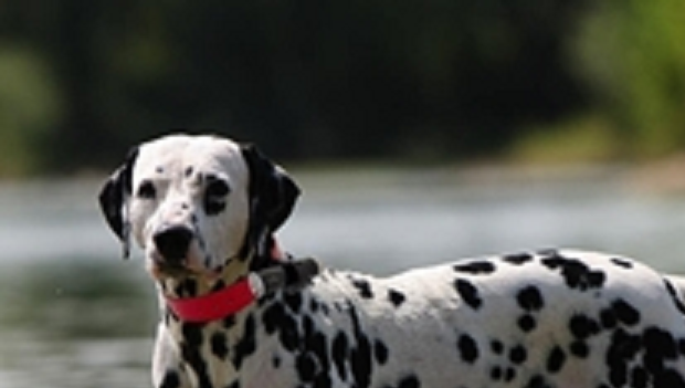 Best New Pet Supplies for 2015