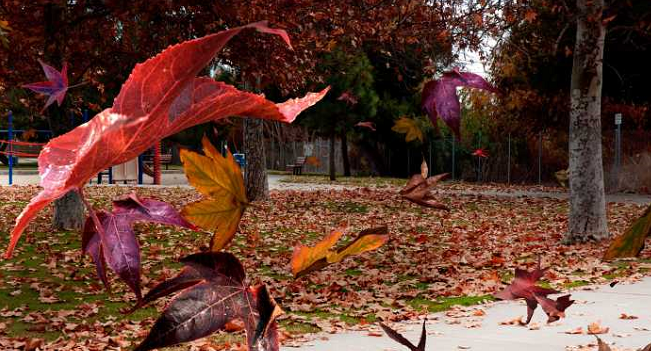 Home Maintenance To-Do's for Fall